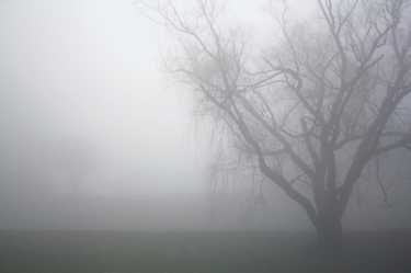 how much water can you harvest from fog green infrastructure digest